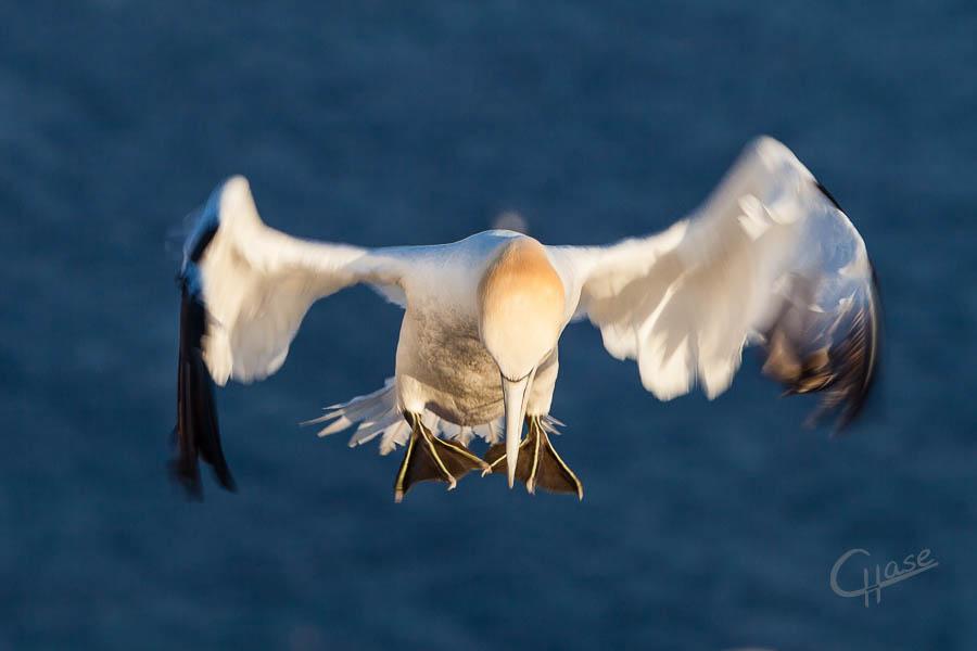 Achtung Landung